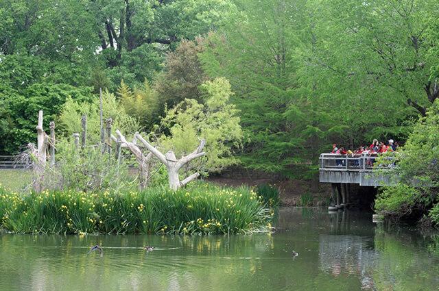 Gibbon Deck at Cameron Park in Waco, Texas